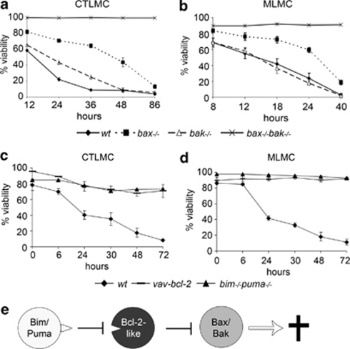 ( a and b ) Loss of Bax protects both CTLMC and MLMC from cytokine deprivation-induced apoptosis more potently than loss of Bak. Mast cells from wt, bax −/− , bak −/− and bax −/− bak −/− mice were deprived on cytokines for 86 or 40 h, respectively. Cell viability was analyzed by PI staining and FACS analysis. Data are presented as mean (±S.E.M.) of three independent experiments. ( c and d ) Survival of CTLMC and MLMC from wt, bim −/− puma −/− and vav-bcl-2 transgenic mice in absence of cytokines was also analyzed by PI staining and FACS analysis. Data are presented as mean (±S.D.) of at least three independent experiments. ( e ) A schematic picture illustrating the model of indirect activation of apoptosis involving the three groups of Bcl-2 family proteins controlling cell fate: pro-apoptotic BH3-only proteins (Bim and Puma), anti-apoptotic Bcl-2-like proteins (Bcl-2) and effector proteins (Bax/Bak)