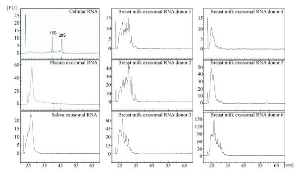 Exosomal RNA analysed using a Bioanalyzer. Total RNA was isolated from saliva, plasma and breast milk exosomes using Trizol ® and analysed with a Bioanalyzer. The results show that exosomes from human saliva, plasma and breast milk contain a dissimilar RNA content compared to cellular RNA from HMC-1 cells, as exosomes contain little or no ribosomal RNA.