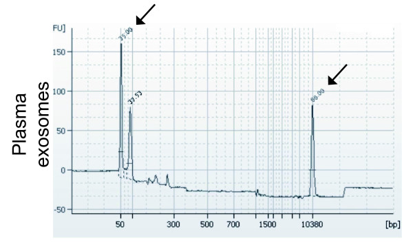 Detection of mRNA in plasma exosomes using a Bioanalyzer. The exosomal RNA was transcribed to cDNA using an oligo (dT) primer. The results show that a portion of the RNA in plasma exosomes is mRNA. Arrows show the peaks for the lower and upper markers. The peaks in between these markers indicate the presence of cDNA synthesised from plasma exosomal RNA.