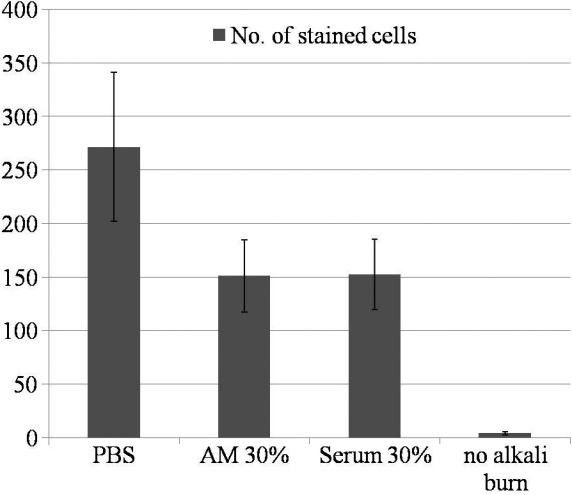 Numbers of stained cells expressing F4/80 on the section of cornea 48 h after alkali burn. The number of stained cells was significantly higher in the control group compared to the AM suspension and serum eyedrop group. (p=0.027) Note there were almost no stained cells in the comparison group without any manipulation.