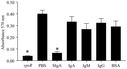 Influence of non-specific SIgA and serum human immunoglobulins on MO10 biofilm formation. Overnight cultures of MO10 were diluted and incubated without shaking for 24 hr at 30° C with 2 mg/ml doses of human non-specific SIgA or serum IgA, IgG, IgM, or <t>BSA.</t> MO10 without immunoglobulin and the biofilm mutant vpsR were evaluated as positive and negative controls, respectively. Significant ( p ≤0.05, ANOVA) difference in biofilm formation between * indicated group and <t>PBS.</t> Results are representative of three independent experiments.
