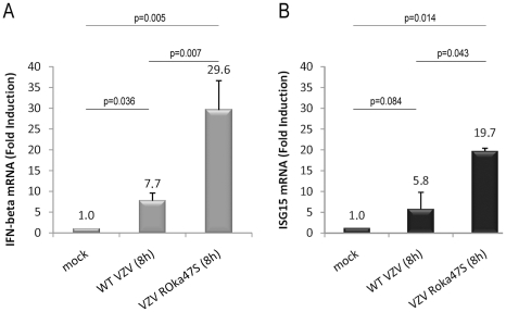 In absence of ORF47p expression, IRF3-dependent gene expression is increased. HEK-293 cells stably expressing TLR3 were mock-infected or infected with either the WT VZV or the mutant VZV ROka47S for 8 hours. Total RNA were harvested and subjected to a Reverse Transcription reaction. cDNA were subjected to a quantitative Real Time PCR in presence of SYBR Green. Primers directed to ifnβ (A) and isg15 (B) were used. RT-PCR was normalized using the 18S RNA expression level. Error bars indicate the standard deviation of the mean.