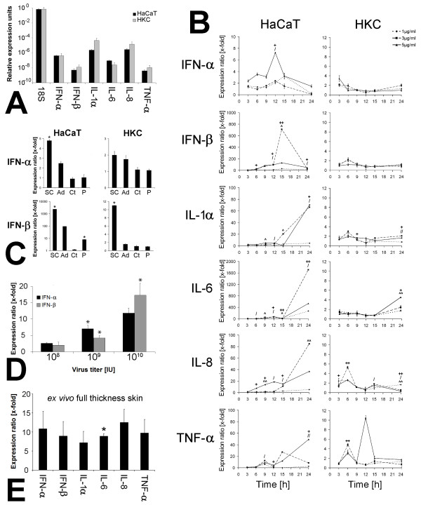 DNA internalization induced innate immune reaction . (A) <t>RT-PCR</t> analysis of type-I-interferon and cytokine basal expression in untreated HaCaT cells and HKC. (B) RT-PCR analysis of type-I-interferon and cytokine expression in HaCaT cells and HKC stimulated with different doses of adenoviral DNA (1, 3 and 5 μg DNA/ml medium) for 3 to 24 h. Results were normalized to a vehicle control (Fugene alone) (^ = p