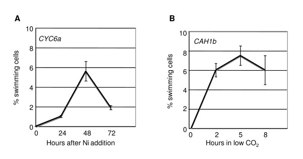 Time course of inducible swimming in one CYC6:RSP3-HA (Panel A) and one CAH1:RSP3-HA (Panel B) transformant . The CYC6:RSP3-HA transformant was grown in 6 ml in 6-well microtiter plates with shaking (120 rpm) and the CAH1:RSP3-HA transformant was grown in 150 ml in 250-ml Erlenmeyer flasks with bubbling.