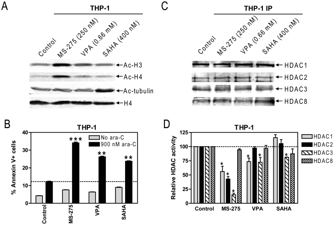 Effects of equal doses (IC 20 ) of structurally-diverse HDACIs on acetylation of histones H3 and H4 and α-tubulin, and cytarabine-induced apoptosis in pediatric AML cells. Panel A: THP-1 cells were treated with equal doses (IC 20 s, determined by MTT assays) of MS-275, VPA or SAHA for 48 hrs. Acetylation of histones H3 and H4, and α-tubulin were determined by western blots probed by anti-ac-H3, -ac-H4, -ac-tubulin, or –H4 antibodies. Panel B: THP-1 cells were treated with cytarabine (900 nM, IC 20 ) or equal doses of MS-275, VPA, or SAHA, alone or in combination for 48 hrs. Early and late apoptosis events were determined by annexin V/PI staining and flow cytometry analysis. **, p