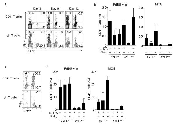 IFN-γ expression and antigen specificity in eYFP + and eYFP − CD4 T cells (a) Draining LN cells from MOG/CFA immunized mice were stained for CD4 and γδ TCR and assessed for eYFP and intracellular IFNγ at the indicated days after immunization. (b) bar graphs showing % of eYFP + or eYFP − CD4 T cells from draining lymph nodes at day 12 expressing cytokines following restimulation with PdBU-ionomycin (left panel) or MOG peptide (right panel). Mean values +/− SD of three individual mice are shown. (c) Representative FACS plots showing expression of eYFP and IFN-γ of infiltrating CD4 + and γδ T cells in the spinal cord. (d) bar graphs showing % of eYFP + or eYFP − CD4 T cells from spinal cord at day 15 expressing cytokines following restimulation with PdBU-ionomycin (left panel) or MOG peptide (right panel).