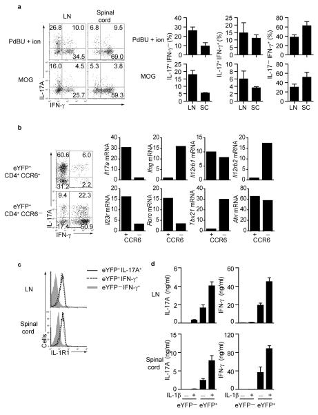 Transcriptional changes in eYFP + CD4 + T cells (a) CCR6 + eYFP + CD4 + T cells from 2D2 IL-17-reporter mice were purified 4 days after MOG-CFA immunization and adoptively transferred into immunized Rag-deficient mice. FACS plots and bar graphs of IL-17A and IFN-γ expression in eYFP + CD4 + T cells from draining lymph nodes and spinal cord (day 16) restimulated with PdBU-ionomycin (upper panels) or MOG peptide (lower panels). Histograms show mean values for individual mice +/− SD. (b) CCR6 − and CCR6 + eYFP + CD4 + T cells from spinal cord were sorted for qPCR analysis. Representative FACS plots show expression of IL-17A and IFN-γ. Relative gene expression in sorted (not restimulated) cells normalized to the expression of Hprt is shown. (c) CD4 + eYFP − IFN-γ + , representing T H 1, (shaded gray), CD4 + eYFP + IFN-γ + (ex-T H 17 -dotted line), and CD4 + eYFP + IL-17A + (T H 17- solid line) from draining LN and spinal cord cells 15 days after MOG-CFA immunisation were gated and assessed for IL-1R1 expression. The data represent at least three independent experiments. (d) Cytokine levels measured in supernatant of purified eYFP + or eYFP − CD4 T cells from draining lymph nodes or spinal cord (day 15) restimulated with anti-CD3 +/− 20 ng/ml IL-1β for 24 hr. Data show mean values ± SD of <t>cytokines</t> from three individual mice. The data represent at least three independent experiments.