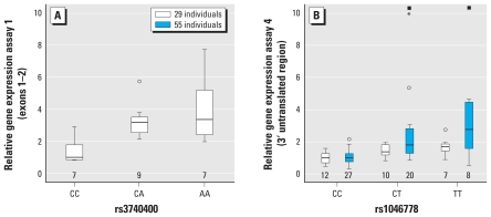 Box plots depicting relative <t>AS3MT</t> gene expression according to genotype in women from Argentina; expression for the reference genotype (associated with low %MMA and high %DMA) is set to 1. ( A ) Relative gene expression based on assay 1 (covering exons 1–2) according to rs3740400 genotype. ( B ) Relative gene expression based on assay 4 (covering part of the 3′ untranslated region) according to rs1046778 genotype. Numbers below the boxes indicate the number of individuals with that genotype. The bottom and top of each box indicate 25th and 75th percentiles, respectively; the line inside the box is the median; whiskers represent the smallest and the largest values that are not outliers. Circles and asterisks indicate outliers; squares indicate outliers outside the range of the y -axis, which had a gene expression of 25 (CT genotype) and 23 (TT genotype).