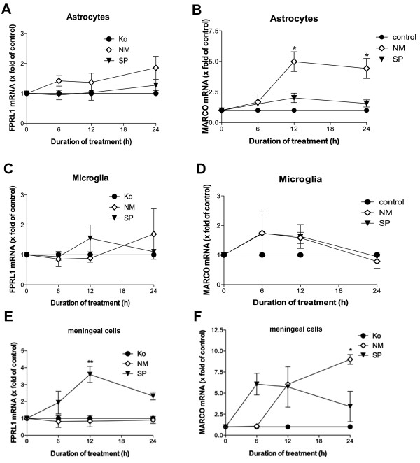 Bacterial supernatants of Neisseria meningitidis induced MARCO expression in primary rat astrocytes and meningeal cells . Astrocytes (A and B), microglia (C and D) and meningeal cells (E and F) were incubated with bacterial supernatants of Gram-positive bacteria Streptococcus pneumoniae (SP) or Gram-negative bacteria Neisseria meningitidis (NM) for 0, 6, 12 and 24 h. FPRL1 or MARCO mRNA expression was analyzed using SYBR green real-time RT-PCR and results were compared to the untreated sample. GAPDH (housekeeping gene) was used as an internal control. The data were assessed from three independent experiments in triplicate. An asterisk indicates a significant difference (**, p