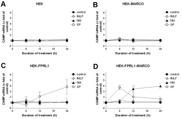 Increased CAMP (human) expression in transfected HEK293 cells . For analysis of CAMP mRNA expression, untransfected (A) or hMARCO- (B) , hFPRL1- (C) , and hFPRL1/hMARCO- (D) expressing HEK293 cells were treated with Neisseria meningitidis (NM), Streptococcus pneumoniae (SP) or 1 μM fMLF for 0, 6, 12 and 24 h. mRNA expression was analyzed using TaqMan real-time RT-PCR and results were compared to the untreated sample. 18 s (housekeeping gene) was used as an internal control. The data was assessed from three independent experiments.