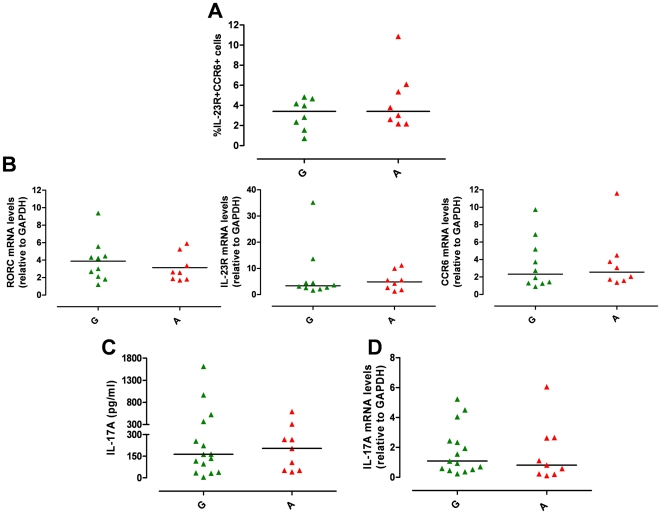 IL23R R381Q gene variant does not affect Th17 differentiation. IL-1β/IL-23-polarized Th17 cells were used for phenotypic analysis (on d13) or assayed for IL-17A mRNA expression (on d14) or secretion (on d15). ( A ) Percentage of CCR6 + IL-23R + IL-1β/IL-23-polarized Th17 cells did not significantly differ between G (green triangles) and A group (red triangles). ( B ) mRNA expression levels of RORC, IL-23R and CCR6 did not differ between G and A group. ( C ) IL-17A production and ( D ) IL-17A mRNA expression did not differ between G and A group. Each symbol represents one individual, horizontal bars represent medians. Mann Whitney test was performed yielding P values > 0.05 for all panels.