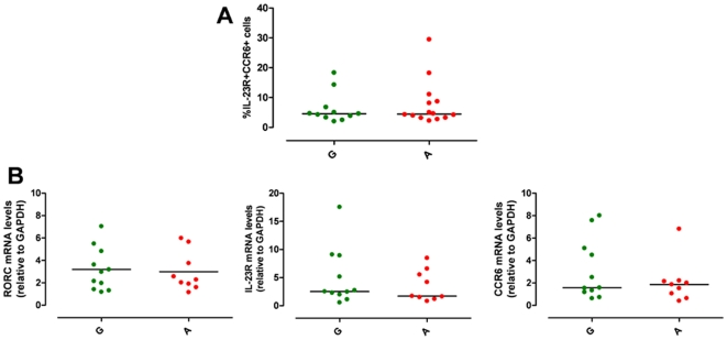 IL23R R381Q gene variant and IL-1β-polarized Th17 cells. IL-1β-polarized Th17 cells were used for phenotypic analysis on d13. ( A ) Percentage of CCR6 + IL-23R + IL-1β-polarized cells did not significantly differ between G (green triangles) and A group (red triangles). ( B ) mRNA expression levels of RORC, IL-23R and CCR6 did not differ between G and A group. Each symbol represents one individual donor; horizontal bars represent medians (A) or means (B). Mann Whitney test (A) or unpaired t test (B) were performed yielding P values > 0.05 for all panels.