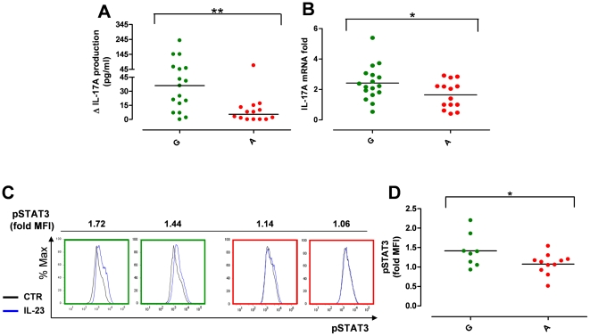 IL23R R381Q gene variant reduces IL-23-induced IL-17A production and STAT3 phosphorylation. IL-1β-polarized Th17 cells collected on d13 were stimulated with IL-23. ( A ) IL-17A production in response to 48 h IL-23 stimulation was significantly reduced in IL-1β-polarized Th17 cells from A (red dots) compared to G (green dots) group. Data are expressed as net IL-17A production in response to IL-23. ( B ) IL-17A mRNA expression in response to 24 h IL-23 stimulation was significantly reduced in IL-1β-polarized Th17 cells from A compared to G group. Data are expressed as fold increase compared to unstimulated cells. ( C ) Representative flow cytometry histograms from G (green frame) and A (red frame) donors showing STAT-3 phosphorylation in response to 15 min IL-23-stimulation (blue line) as compared to unstimulated control cells (black line) and expressed as fold Median Fluorescence Intensity (MFI). ( D ) STAT3 phosphorylation in response to IL-23-stimulation was reduced in IL-1β-polarized cells from A compared to G group. Each symbol represents one individual donor; horizontal bars represent medians (A) or means (B, D). Mann-Whitney (A) or unpaired t test (B, D) was performed, *P