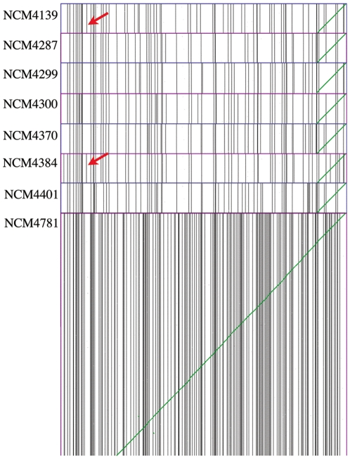 A series of syntenic dotplots between the NCM strains and the reference genome MG1655. Scaffolds of the NCM strains are ordered by their syntenic path to MG1655. Vertical black lines are divisions between contigs and green diagonal lines are syntenic gene pairs. Red arrows show an additional contig break in NCM4139 and NCM4384 caused by a new insertion of IS186 in the promoter for the lon gene. The extra breaks in strain NCM4781, which were due to insufficient sequence coverage, are immediately apparent.