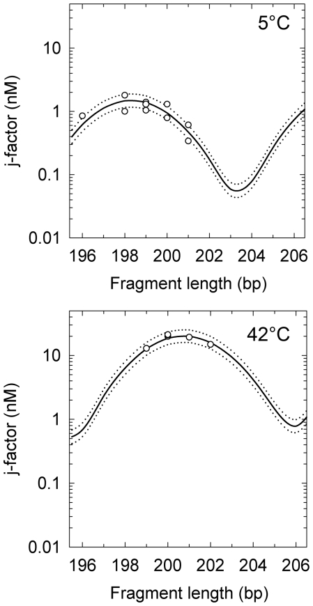 The j -factor measured for λ phage DNA fragments with EcoRI sticky ends at 5°C (top) and HindIII sticky ends at 42°C (bottom). The lines correspond to the theoretical fit of the data. The best fit shown by the solid lines, correspond to DNA persistence length of 53.2 nm and γ of 10.43 for 5°C and 42.5 nm and γ of 10.56 for 42°C; the value of C was equal to 3.10 −19 erg·cm for both temperatures. The dotted lines correspond to the theoretical equation with a reduced/increased by 1 nm from the best fits.