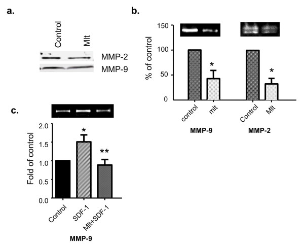 Melatonin suppresses the expression and activity of MMP-2 and MMP-9 in human breast cancer cells . Conditioned medium was collected and concentrated as described in Materials and methods. (a) Melatonin's effect on the protein expression of MMP-2 and MMP-9. MCF-7/6 cells were treated with melatonin (Mlt, 10 -9 M) or diluent (Control, 0.00001% ethanol) for 48 hours. Expression of MMP-2 and MMP-9 in the conditioned medium was analyzed by Western blot analysis using anti-MMP-2 and anti-MMP-9 antibody. (b) The effect of melatonin on the activity of MMP-2 and MMP-9. MCF-7/6 cells were treated with melatonin (Mlt, 10 -9 M) or diluent (Control, 0.00001% ethanol) for 48 hours. The gelatinase activity of MMP-9 and MMP-2 in the conditioned medium was determined by gelatin zymography. The band intensities of MMP-9 and MMP-2, respectively, are presented in the graph as percentages of control (set as 100%). * P