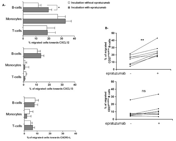 Enhanced migration of CD27 negative B-cells from SLE patients towards CXCL12 after epratuzumab incubation . To assess the migration towards CXCL12, CXCL13 and CXCR3 ligands of PBMCs from eight SLE patients, we performed transwell migration assays after epratuzumab incubation (10 μg/mL for 90 minutes). The migration of different cell types towards CXCL12 was analyzed by flow cytometry [(T-cells, CD3 positive ), (monocytes, CD14 positive ), (total B-cells CD19 positive ); CD27 negative B-cells CD27 positve B-cells] and epratuzumab incubation lead to a significantly enhanced migration of B-cells (a) (* P