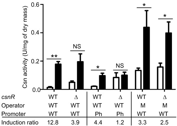 Effect of mutations in csnN106 gene and S. lividans host on chitosanase production . Chitosanase activity was assayed in supernatants sampled from 16 h cultures. Media: M14 M with 0.5% mannitol (empty columns) or M14 M with 0.125% GlcN and 0.375% chitosan oligomers (filled columns). Data and error bars are the mean of three experiments. ** P ≤ 0.01, * P ≤ 0.05 obtained with an unpaired t test (GraphPad Prism version 5.00 for Windows; GraphPad Software, San Diego, CA). The table lists the genotypes of strains for each pair of columns. Variants of csnN106 gene were introduced in one copy per genome via an integrative vector. Symbols: WT: wild type; Δ: ΔcsnR mutant host; M: mutated palindromic box; Ph: phage-type promoter. The induction ratio represents the chitosanase activity of culture induced with GlcN and chitosan oligomer divided by the activity of culture in mannitol medium.