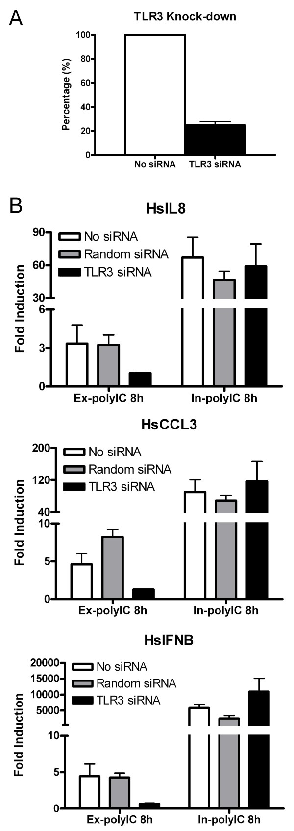 Involvement of TLR3 in gene activation in response to extracellular and intracellular polyIC treatments . HT1080 cell line was treated with 40 μg/ml of ex-polyIC and 0.4 μg/ml of in-polyIC for 8 hours after knocking down TLR3 using gene-specific siRNA. Control siRNA with random siRNA sequences was included to monitor non-specific inhibition. Gene expression was measured using qPCR and the mean from triplicate experiments was calculated. Error bars represent standard error. A. Nucleofection of TLR3 siRNA achieved about 75% knock-down efficiency. B. IL8, CCL3 and IFNB inductions in response to ex-polyIC treatment are dependent on TLR3 whereas the same gene inductions in response to in-polyIC treatment are independent of TLR3.
