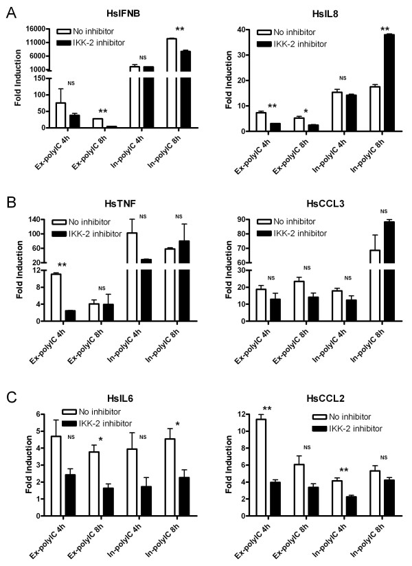 Involvement of IKK-2 in gene activation in response to extracellular and intracellular polyIC treatments . HT1080 cell line was treated with 40 μg/ml of ex-polyIC and 0.4 μg/ml of in-polyIC for 4 and 8 hours in the absence/presence of IKK-2 inhibitor. Gene expression was measured using qPCR. Graphs show the average of two or three independent experiments, and the student's t-test was performed to indicate statistically significant differences between untreated control and IKK-2 inhibitor-treated cells. (* is for P-value≤0.05, ** is for P-value≤0.01 and NS is 'not significant'.) A. IFNB and IL8 inductions in response to in-polyIC treatment are not significantly affected by IKK-2 inhibition whereas the same gene inductions in response to ex-polyIC treatment are affected by IKK-2 inhibition. B. TNF and CCL3 inductions in response to both ex-polyIC and in-polyIC are relatively not affected by IKK-2 inhibition. C. IL6 and CCL2 inductions in response to both ex-polyIC and in-polyIC are affected by IKK-2 inhibition.