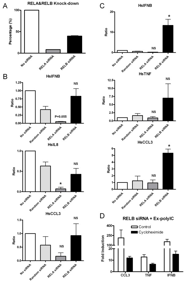 Involvement of RELA and RELB in gene activation in response to extracellular and intracellular polyIC treatments . HT1080 cell line was treated with 40 μg/ml of ex-polyIC and 0.4 μg/ml of in-polyIC for 8 hours after knocking down RELA and RELB using gene-specific siRNAs. Gene expression was measured using qPCR. Graphs show the average of two independent experiments, and the student's t-test was performed to indicate statistically significant differences between non-specific siRNA control and gene-specific knock-down cells. (* is for P-value≤0.05, ** is for P-value≤0.01 and NS is 'not significant'.) A. Nucleofection of RELA and RELB siRNAs achieved about 92% and 60% knock-down efficiencies, respectively. B. IFNB, IL8 and CCL3 inductions in response to in-polyIC treatments are dependent on RELA but independent on RELB. C. IFNB, TNF and CCL3 inductions in response to ex-polyIC treatment are independent of RELA but dependent on RELB. Particularly, IFNB, TNF and CCL3 inductions in response to ex-polyIC treatment are significantly increased in RELB knock-down. D. HT1080 cell line with RELB-knocked-down was treated with 40 μg/ml of ex-polyIC in the absence/presence of 10 μg/ml cycloheximide. The increase in gene inductions of IFNB, TNF and CCL3 is diminished by cycloheximide treatment.