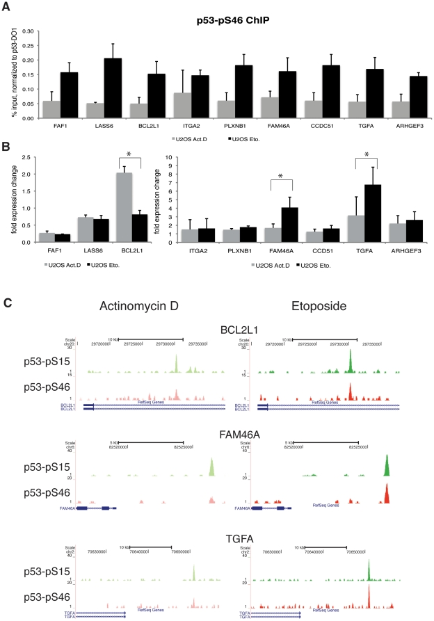 Target genes differentially bound by p53-pS46. (A) ChIP-qPCR recovery of loci which show a higher degree of bound p53 phosphorylated at S46 upon Etoposide treatment in ChIP-seq. U2OS cells were treated with Actinomycin D or Etoposide for 24 hours, before chromatin was isolated. ChIP was performed with the p53-pS46-antibody and qPCR analysis was performed with primers for the putative binding sites. Shown is the recovery of p53-pS46 normalized to the recovery of total p53-DO1 binding in Etoposide or Actinomycin D treated U2OS cells. Error bars represent standard deviation of three individual experiments. (B) Expression change of the respective target genes in U2OS cells treated with Actinomycin D or Etoposide for 24 hours. After cDNA synthesis qPCR was performed and results were normalized against GAPDH expression. Shown is fold over untreated cells. Error bars represent standard deviation of three individual experiments. Asterisks indicate statistical significance shown by Student's t-test (* = P