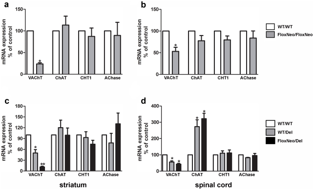 VAChT mRNA expression is changed in VAChT mutant mice. a) VAChT, ChAT, CHT1 and AChase mRNA levels in striatum and b) spinal cord of WT and VAChT FloxNeo/FloxNeo mice. c) VAChT, ChAT, CHT1 and AChase mRNA levels in striatum and d) spinal cord of VAChT WT/WT , VAChT FloxNeo/Del and VAChT WT/Del mice. mRNA expression levels were quantified by qPCR using actin to normalize the data. Graphs represent average of 4–6 different mice. (*) and (**) indicate p
