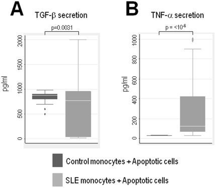 Monocytes from patients with SLE have prominent production of TNF-α, but decreased production of TGF-β. Monocytes obtained from healthy donors (n = 13) or patients with SLE (n = 47) were co-incubated in the presence of apoptotic Jurkat cells. After overnight incubation, production of TGF-β ( A ) and TNF-α ( B ) were determined in the supernatants by ELISA. Data is shown as boxplots. Comparison of mean cytokine secretion between groups was performed by Students t-test.