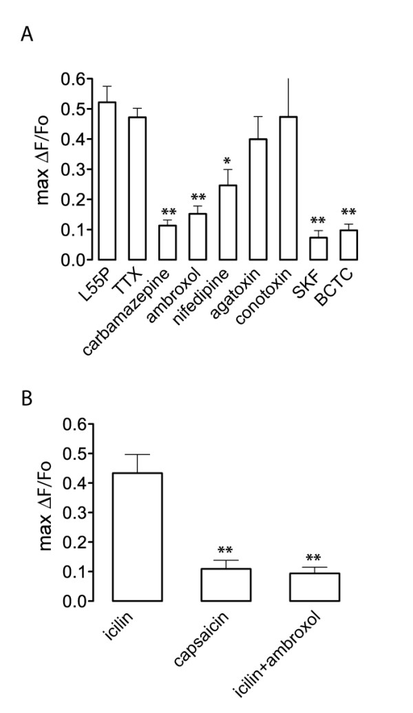 Effect of ion channel blockers on L55P TTR-induced calcium influx and analysis of sensitivity to icilin and capsaicin , (A) L55P was applied to DRG growth cones in the presence of VGCC inhibitors <t>(nifedipine,</t> ω-agatoxin IVA, ω-conotoxin GIVA), Na V inhibitors (tetrodotoxin, ambroxol and carbamazepine) and TRP inhibitors (SKF-96365, BCTC). The resulting maximal calcium influx (max ΔF/F 0 ) calculated over the imaging period (7 min) was calculated. (B) Effect of capsaicin (1 μM) and icilin (100 μM) on cytosolic calcium in DRG growth cones in culture. When DRG cultures were pre-treated with ambroxol (5 μM), icilin-induced calcium fluorescence was significantly decreased. All graphs show maximal ΔF/F 0 ± SEM for n = 12-24 growth cones. Significant differences from control values are depicted as: * p