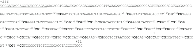 Sequence of the MB-COMT promoter . This DNA fragment is located from nucleotides −256 to +51, and the cytosine shown in bold marked +1 is the 5′ end of the encoded mRNA. The underlined sequences mark the location of the nested PCR primers for bisulfite sequencing. The cytosines at 33 CpG sites are numbered −243 ∼ +22 with CpGs shown in bold.