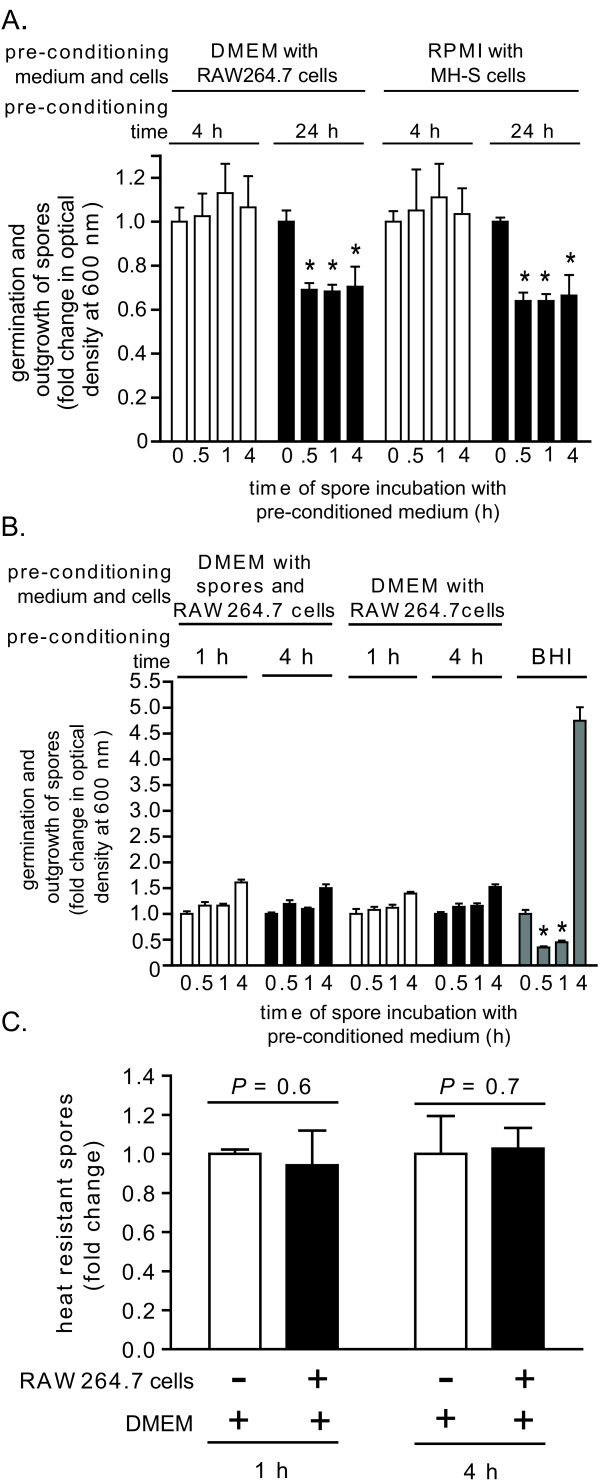 The effects of pre-conditioned culture medium on the germination state of B. anthracis spores . DMEM (A, B) or RPMI (B) were pre-conditioned by incubating with monolayers of RAW264.7 (A, B) or MH-S cells (B) at 37°C and under 5% CO 2 , in the absence (A) or presence (MOI 10) (B) of B. anthracis spores. (A, B). After 4 h (white bars) or 24 h (black bars) (A), or after 1 (white bars) and 4 h (black bars) (B), the medium was removed from the monolayers, filter sterilized, and then incubated with B. anthracis spores in 96-well plates at 37°C and with rotary agitation. Germination and outgrowth of spores were monitored at indicated times by measuring O.D. 600 nm . The results are rendered as the O.D. 600 nm of the spore suspension at the indicated time relative to the original O.D. 600 nm of the spore suspension at time = 0 of the 37°C incubation. P -values were calculated to evaluate the statistical significance of the differences between O.D. 600 nm values at the initial time point and O.D. O.D. 600 nm values at the indicated times. For (B), BHI (gray bars) was used as a positive control for germination and outgrowth. (C) An equal number of B. anthracis spores were incubated at 37°C and under 5% CO 2 in DMEM (no FBS) in the absence (white bars) or presence (black bars) of RAW264.7 cells (MOI 10). At indicated times, aliquots of culture medium were removed, and spores were evaluated for heat resistance. The results are rendered as the number of heat resistant spores relative to spores incubated in DMEM alone, which were normalized to 1.0. P -values were calculated to evaluate the statistical significance of the differences in heat resistant spores between those incubated in the presence or absence of RAW264.7 cells. The data in (A-C) are combined from 3 independent experiments conducted in triplicate with error bars indicating standard deviations.