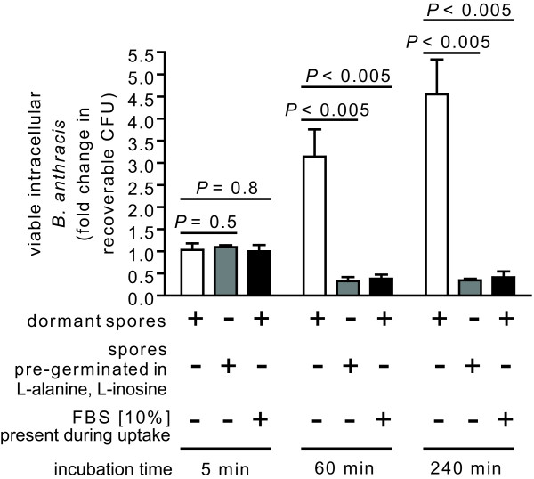 The germination state of spores influences the viability of intracellular B. anthracis . RAW264.7 cells were incubated for 30 min with dormant B. anthracis spores (MOI 10) in DMEM in the presence (+, black bars) or absence (-, white bars) of FBS (10%), or, with pre-germinated spores (MOI 10) in DMEM in the absence of FBS (grey bars). B. anthracis spores were pre-germinated by incubation for 30 min in PBS pH 7.2 supplemented with L-alanine and L-inosine (both at 10 mM), and then washed twice with PBS pH 7.2 to remove germinants. After 30 min, the cells were washed to remove extracellular B. anthracis , and then further incubated with FBS (10%) and, as described under