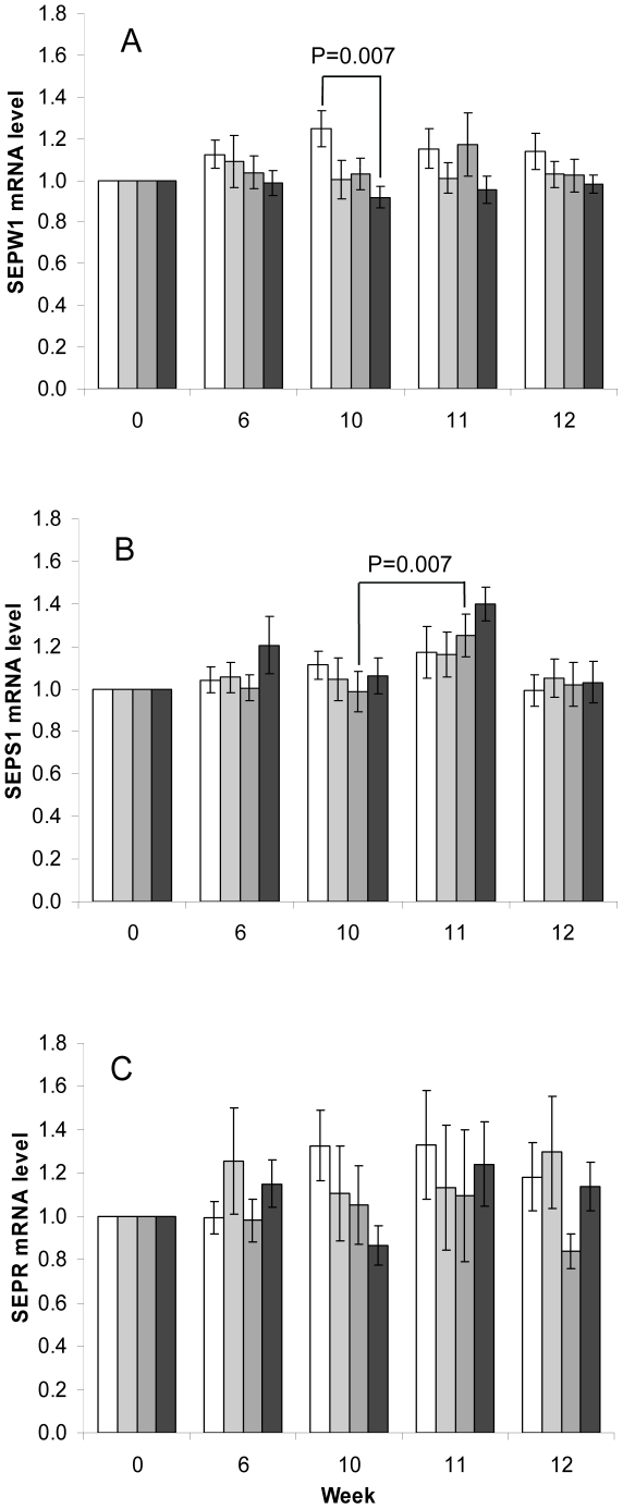 mRNA level in <t>PBMCs</t> measured over the duration of intervention period for (A) SEPW1, (B) SEPS1, (C) SEPR in the placebo and Se-yeast groups. Values are means ± SEM relative to baseline, week 0 expression. GUSB was used as reference gene for normalisation. White bars = placebo group (n = 14 to 20); light grey bars = 50 µg/day Se-yeast (n = 11 to 15); mid grey bars = 100 µg/day Se-yeast (n = 10 to 19); black bars = 200 µg/day Se-yeast (n = 14 to 18). The variation in sample number (n) between time points for each treatment is due to insufficient <t>RNA</t> at some sampling time points and missing time course sample data for some of the target genes. For the SEPS1 gene expression data set: placebo group n = 20 at all time points; 50 µg/day group n = 14 at wks 0, 6 and 12 (n = 13 at wks 10, 11); 100 µg/day group n = 19 at wks 0, 6, 10 (n = 18 at wks 11, 12); 200 µg/day group n = 18 at wks 0, 6, 12 (n = 17 wk 10, n = 15 wk 11). Data were analysed using mixed-effects models and statistically significant differences are indicated on the figure.