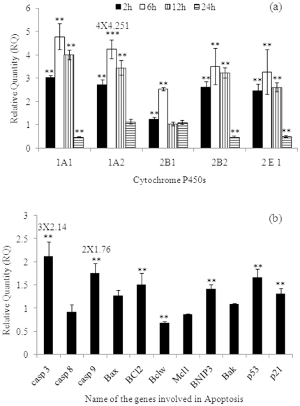 Transcriptional changes in the levels of selected xenobiotic metabolizing cytochrome P450s (CYPs) and apoptosis markers in PC12 cells exposed to MCP. (a) MCP-induced alterations in the mRNA expression of marker genes associated with metabolism of xenobiotics in PC12 cells. Quantitative Real Time PCR (RT-PCR q ) was performed in triplicate by TaqMan Probe using <t>ABI</t> <t>PRISM®</t> <t>7900HT</t> Sequence Detection System (Applied Biosystems, USA). Actin-β was used as internal control to normalize the data and MCP induced alterations in mRNA expression are expressed in relative quantity compared with respective unexposed control groups. (b) MCP induced alterations in the mRNA expression of marker genes associated with apoptosis in PC12 cells. Quantitative Real Time PCR (RT-PCR q ) was performed in triplicate by SYBR Green dye using ABI PRISM® 7900HT Sequence Detection System (Applied Biosystems, USA). Actin-β was used as internal control to normalize the data and MCP induced alterations in mRNA expression are expressed in relative quantity (RQ) compared with respective unexposed control groups. Reliability of Specific products was checked by melting curve analysis as well as running the product onto 2% agarose Gel.