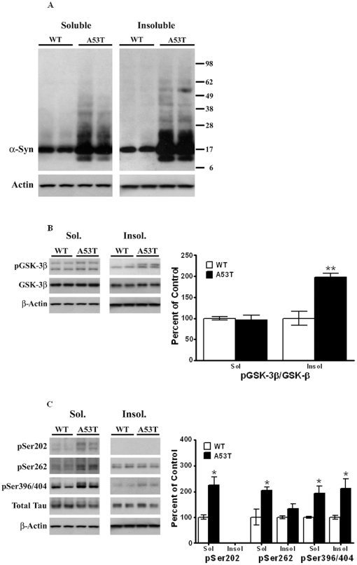 Triton X-100 solubilization of striatal lysates from A53T α-Syn mutant and age-matched control animals. Striatal lysates from A53T α-Syn mutant mice and control, non-Tg mice [4 animals per group] were extracted with Triton X-100 as described in Methods. Proteins in Triton X-100-soluble and Triton X-100-insoluble fractions were measured by Western blots. Blots show representative gels while the bar graphs are composites summarized from all animals, expressed as percent of control, non-Tg mice. (A) β-actin was added as a loading control. (B) p-GSK-3β was normalized to GSK-3β from within each fraction on the blot. (C) pSer202, pSer262 and PSer396/404 were all normalized to total Tau in each fraction, and β-actin was added as a loading control. *,  P