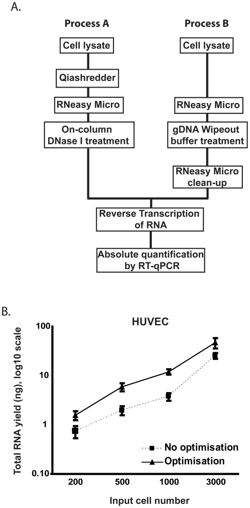 Comparison of experimental workflows for optimised total RNA isolation from minimal cell numbers. ( A ) Titrated HUVEC samples were processed for RNA isolation through Process A or B to establish the optimal workflow for RNA yield from minimal cell numbers. ( B ) HUVECs were titrated over a range of 3000 - 200 cells per tube and split in to 6 aliquots for cell lysis and RNA isolation. Triplicate samples were processed using either process A or B. All samples were then quantified by reverse transcription of the entire yielded RNA and real-time quantitative PCR using SybrGreen probe and β-actin primers against a standard curve of known HUVEC RNA input. Error bars = standard deviation.