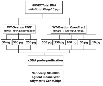 Experimental workflow to assess efficiency of NuGen probe generation technologies using low amounts of input RNA. HUVEC total RNA was titrated to cover a range of input RNA from 50 ng–10 pg. 50 ng (n = 1), 500 pg (n = 2) and 250 pg (n = 2) of total RNA was used as input for the WT-Ovation FFPE system V2 while 500 pg (n = 2), 250 pg (n = 2), 100 pg (n = 2), 50 pg (n = 2) and 10 pg (n = 2) were used as input for the WT-Ovation One-Direct system (NuGen Technologies, Inc). All cDNA reactions were purified via Zymo Research Clean and Concentrator™-25 or Qiagen RNeasy MinElute Cleanup kits (WT-Ovation FFPE V2 and WT-Ovation One-Direct systems respectively) as recommended. All purified cDNA probes were assessed for quantity and quality using the Agilent 2100 Bioanalyzer and the Nanodrop-8000 RNA Nano chips. FL-Ovation™ cDNA Biotin Module V2 (NuGEN) was used for fragmentation and biotin labelling of 5 µg of cDNA and used for subsequent hybridisation to Affymetrix HGU133 Plus 2.0 microarrays.