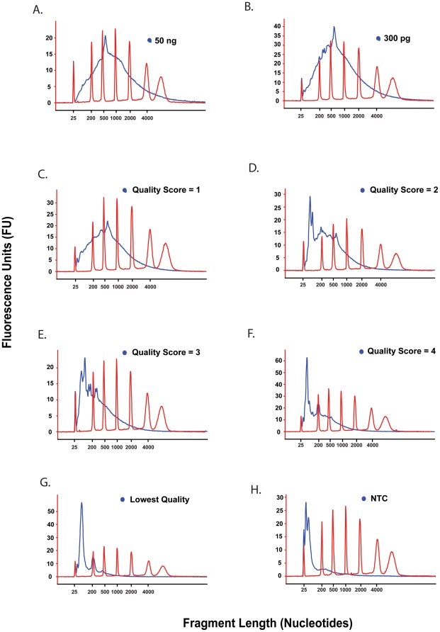 """Assignment of """"quality score"""" to sscDNA probes. Quality scores of 1–4 for sscDNA were assigned following visual assessment of distribution of polynucleotide size, with representative electropherograms shown here. ( A ) sscDNA synthesised from 50 ng total HUVEC RNA represents an amplification positive control of highest quality achievable. ( B ) sscDNA synthesised from 300 pg total HUVEC RNA amplification positive control of highest quality that could be expected from 300 pg of input RNA. ( C–G ) sscDNA synthesised from 300 pg of total RNA from a vascular endothelial biopsy sample. sscDNA has a electropherogram similar to that seen in the positive controls, peaking at over 500 nts and so was attributed a cDNA quality of 1 (C). sscDNAs progressively shorter in size distribution were designated quality scores of 2, 3 or 4 (D–G). sscDNAs designated lowest quality and therefore not hybridised to GeneChips (C) were of predominantly"""