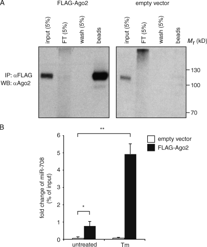 Mature miR-708 is loaded on the RISC. (A) Immunoprecipitation (IP) of <t>FLAG-tagged</t> <t>Ago2</t> (FLAG-Ago2) from 3T3 fibroblasts stably expressing it. (right) 3T3 cells transduced with an empty vector. FT, flow through. WB, Western blot. (B) TaqMan miRNA assay of miR-708 from FLAG-immunoprecipitated fractions obtained from lysates of the cells in A. Error bars are SDs of two independent experiments. *, P