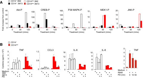Monocyte Subset-Specific Activation Pathways (A) Phosphorylated Akt, p38-MAPK, MEK1, and JNK in CD14 + (black bars) and CD14 lo monocytes (red bars) following treatment with TLR8 agonist (3M2, open bars) or TLR7 agonist (3M13, closed bars) for 0, 30, and 120 min at 37°C. Data are presented as mean fold increase from vehicle control treated cells from three independent experiments. (B) Cytokine production by CD14 + (open black bars) and CD14 dim (closed red bars) monocytes treated with vehicle, 3M2, or 3M13 with or without MEK inhibitor PD98059. Data are presented as mean ± SD in expression (pg/ml) from three independent experiments. See also Figure S4 .