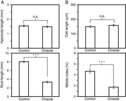 Effects of <t>1,8-cineole</t> on growth of Nicotiana tabacum seedlings. a Effects on hypocotyl length and root length. N. tabacum seedlings were grown in the absence ( control ) or presence ( cineole ) of 440 μM of 1,8-cineole for 10 days, and the hypocotyl length (top) and root length ( bottom ) were measured. Each data point represents the average of 20 individuals that successfully germinated. Vertical bars represent standard errors. b Effects on the cell elongation and cell proliferation in the affected roots. N. tabacum seedlings were grown in the absence ( control ) or presence ( cineole ) of 440 μM 1,8-cineole for 10 days, and the sizes of matured cells ( top ) and mitotic index in the root apical meristem (bottom) were measured. For cell length ( top ), each point represents average value of 60 cells derived from more than 4 individuals. Vertical bars represent standard errors. For mitotic index, each point represents the average value from 8 ( control ) or 7 ( cineole ) individuals. Vertical bars represent standard errors. n.s.; not significant ( P > 0.05), ***; P