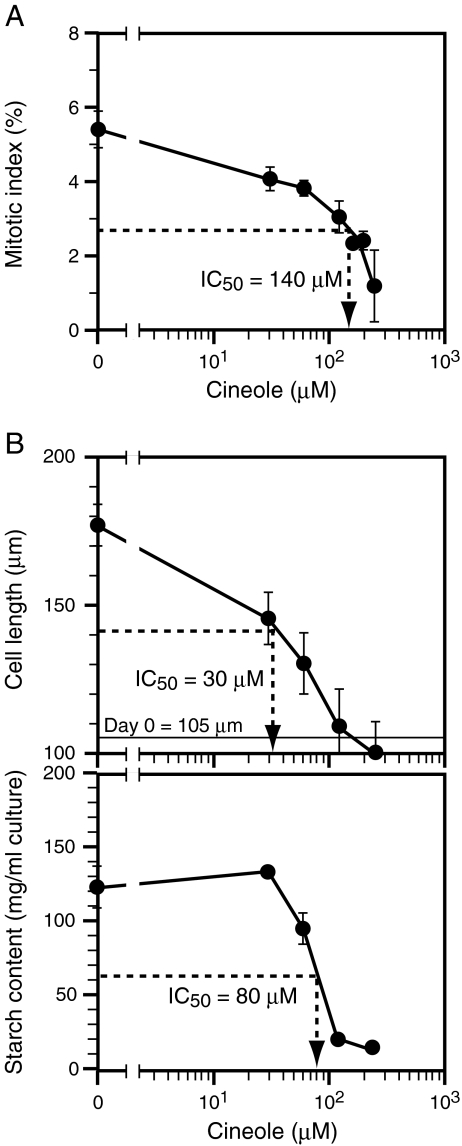 Effects of 1,8-cineole on the proliferation and elongation of BY-2 cells. A The effects of a range of doses of 1,8-cineole on the proliferation of BY-2 cells cultured in D-medium are shown. The mitotic index was examined on d 2. The average values from three independent experiments are shown. Vertical bars represent standard errors. B The effects of a range of doses of 1,8-cineole on elongation ( top ) and starch accumulation ( bottom ) in BY-2 cells cultured in B-medium. Cell length and starch content were examined on d 2. The average values from three independent experiments are shown. Vertical bars represent standard errors. In A and B , 1,8-cineole was applied through the direct-addition method only. The estimated final concentrations of 1,8-cineole in the airspace (gas phase) were 0 to 240 μM, while the initial concentrations in the culture medium (liquid phase) immediately after application were 25 times higher. IC 50 values estimated from the data are shown in respective graphs