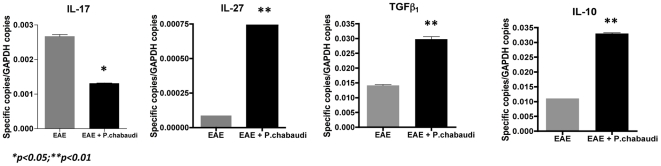 Induction of EAE in Plasmodium chabaudi -infected mice modulates their cytokine expression profile. Expression levels of IL-17A, IL-10, IL-27 and TGF-β 1 measured by qRT-PCR in P. chabaudi infected 6 days after EAE induction (black bars) and the EAE alone (gray bars) group. The values represent the mean number of specific cytokine gene copies relative to GAPDH in three-five mice ± SD.