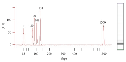 "Electropherogram and ""gel-like"" image of positive control on the Agilent Bioanalyzer 2100. The  x -axis on the electropherogram represents amplicon size (bp), whist the  y -axis represents the measurement response of fluorescence units (FUs). Amplicons of interest in order of size (bp) are lower marker (15), Zein (80), Lectin (90), CaMV (108) and combined CaMV 35s promoter/NOS terminator (131) amplicons, and the upper marker (1500)."