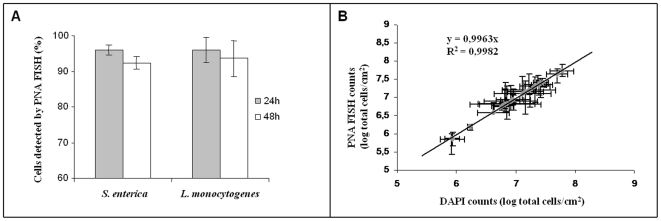 PNA FISH validation for biofilm samples. (A) Percentage of cells detected by PNA FISH for 24 and 48 h biofilms, in comparison with the total cells counts by DAPI. (B) Correlation between the PNA FISH counts and the DAPI counts for 24 and 48 h S. enterica e L. monocytogenes pure- culture biofilms. A high correlation between the two methods was observed and up to 48 hours at least 90% of the populations is detected by PNA FISH.