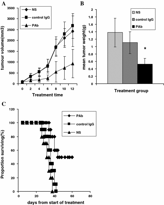 Inhibitory effect of PAb on tumour growth in a mouse model injected subcutaneously with MPC-11. a After mice bearing subcutaneous MPC-11 tumour nodules were injected (i.v.) with PAb, a significant decrease in tumour size was noted that was not seen among the NS-treated and control IgG-treated mice. b Comparison of average tumour humid weights between all groups. *Represents significant difference between the PAb treatment group and both control groups ( P