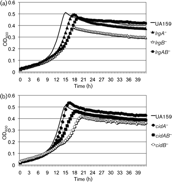 Growth curves of S. mutans wild-type and its lrg (a) and cid (b) derivatives under oxidative stress. Strains were grown in BHI medium containing 10 mM paraquat under anaerobic conditions. Growth was monitored in a Bioscreen C system that was set to shake for 15 s every 30 min. For anaerobic growth, sterile mineral oil (50 μl) was placed on top of the broth cultures. The results are representative of two independent experiments.