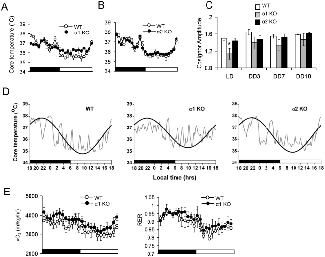 Disruption of circadian physiology in AMPKα-deficient mice. (A,B) Core body temperature was measured by telemetry. AMPKα1−/−, AMPKα2−/− and WT mice were monitored in LD for 7 days followed by DD for 14 days. Representative data (mean ± SE) is LD day 7. Lights on is indicated by a white bar and lights off is indicated by a black bar. The same WT data is plotted in A and B. (C) Amplitude calculated from cosinor analysis of WT, AMPKα1−/− and AMPKα2−/− mice in LD, DD day 3, 7, 10. Results are expressed as mean ± S.E. * P