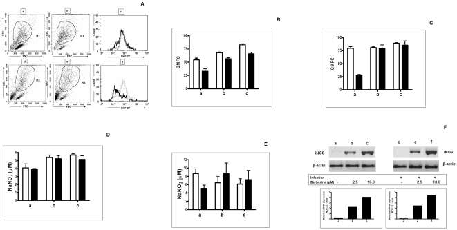 Effect of Berberine chloride on generation of NO and expression of iNOS. A: A representative dot plot of uninfected (a) and Leishmania infected (d) murine peritoneal macrophages, that were treated with Berberine chloride (10 µM, 48 h, b, e). Cells were gated on the basis of characteristic linear forward and side scatter features of macrophages and subsequently DAF-2T fluorescence was measured on a logarithmic scale in the FL1 channel. A representative histogram of uninfected macrophages (c, ) and L. donovani infected macrophages (f, ) for DAF-2T that were treated with Berberine chloride (…) macrophages as described in Methods . B: Uninfected macrophages (1×10 6 /ml, □, a) or L. donovani infected macrophages (▪, a) were treated for 24 h with Berberine chloride 2.5 µM (b) and 10 µM (c), and processed for measurement of DAF-2T fluorescence as described in Methods . Data are expressed as the mean GMFC ± SEM of at least 3 experiments in duplicate. C: Uninfected macrophages (1×10 6 /ml, □, a) or L. donovani infected macrophages (▪, a) were treated for 48 h with Berberine chloride 2.5 µM (b) and 10 µM (c) and processed for measurement of DAF-2T fluorescence as described in Methods . Data are expressed as the mean GMFC ± SEM of at least 3 experiments in duplicate. D: Uninfected macrophages (1×10 6 /ml, □, a) or L. donovani infected macrophages (▪, a) were treated for 24 h with Berberine chloride 2.5 µM (b) and 10 µM (c) and assayed for levels of extracellular NO as described in Methods . Each point represents the mean ± SEM of NO 2 − (µM) of at least 3 experiments in duplicate. E: Uninfected macrophages (1×10 6 /ml, □, a) or L. donovani infected macrophages (▪, a) were treated for 48 h with Berberine chloride 2.5 µM (b) and 10 µM (c) and assayed for levels of extracellular NO as described in Methods . Each point represents the mean ± SEM of NO 2 − (µM) of at least 3 experiments in duplicate. F: Uninfected macrophages (a) and L. donovani infected macrophages (d) were treated