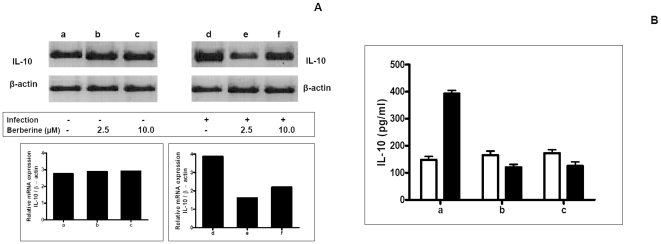Effect of Berberine chloride on IL-10 in macrophages. A: Uninfected (a) and L. donovani infected (d) macrophages were treated for 18 h with Berberine chloride 2.5 µM (b, e) or 10 µM (c, f). RNA was isolated, subjected to RT-PCR and the products of β-actin and IL-10 mRNA were resolved on an agarose gel (1.5%) and quantified densitometrically using Total lab software as described in Methods . B: Uninfected macrophages (1×10 6 /ml, □, a) or L. donovani infected macrophages (▪, a) were treated with Berberine chloride 2.5 µM (b) and 10 µM (c) for 24 h and assayed for levels of IL-10 in culture supernatants by ELISA as described in Methods . Each point represents the mean ± SEM of IL-10 (pg/ml) of at least 3 experiments in duplicate.